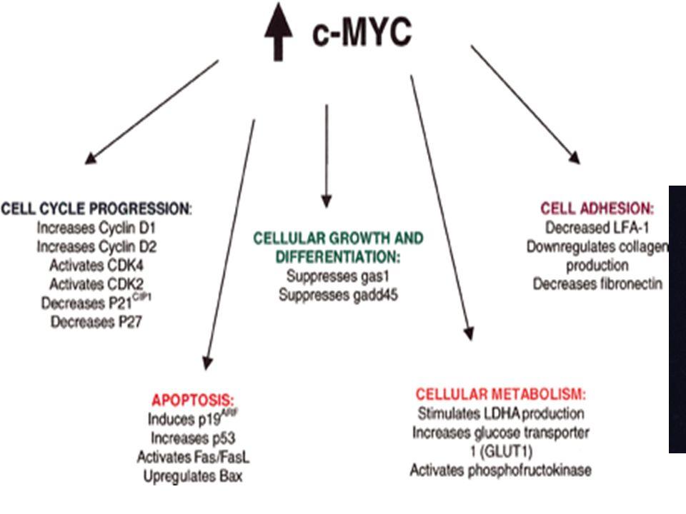 Citogenética y FISH C-MYC t(8;14) [t(2;8), t(8;22)]
